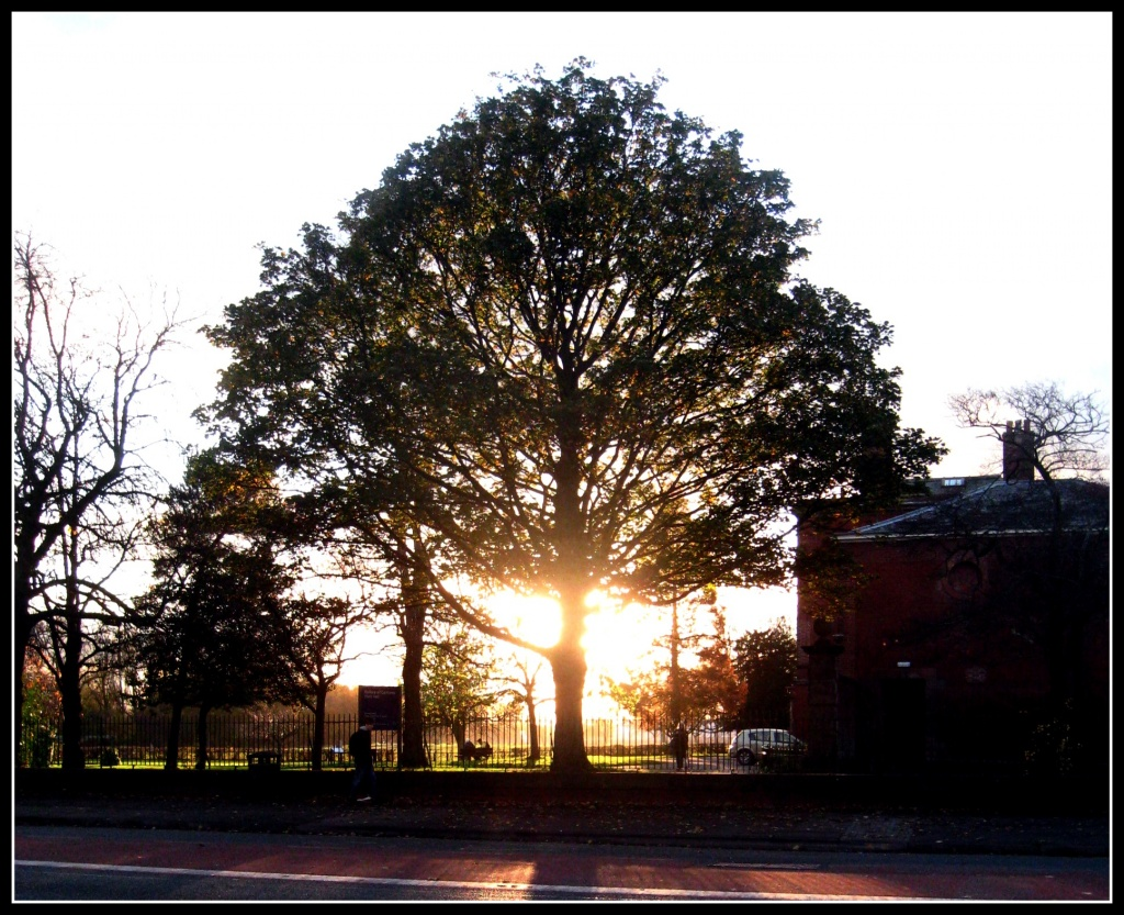 Tree at sunset by sarahhorsfall