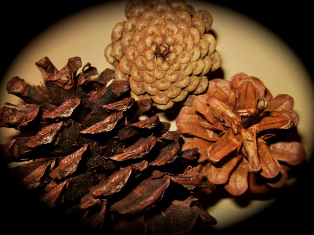 Cones by pamelaf