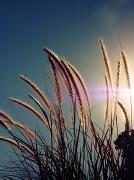 23rd Nov 2011 - Fading Sunlight