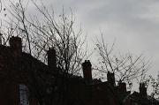23rd Nov 2011 - Rooftops