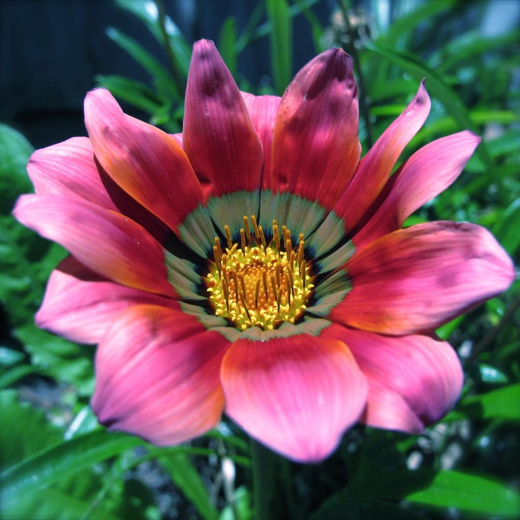 Flower by alia_801
