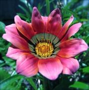 24th Nov 2011 - Flower