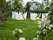 12th May 2010 - Line of washing.