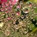Flower-web by geertje