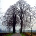 trees by gijsje