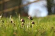 25th Nov 2011 - Magic Mushrooms