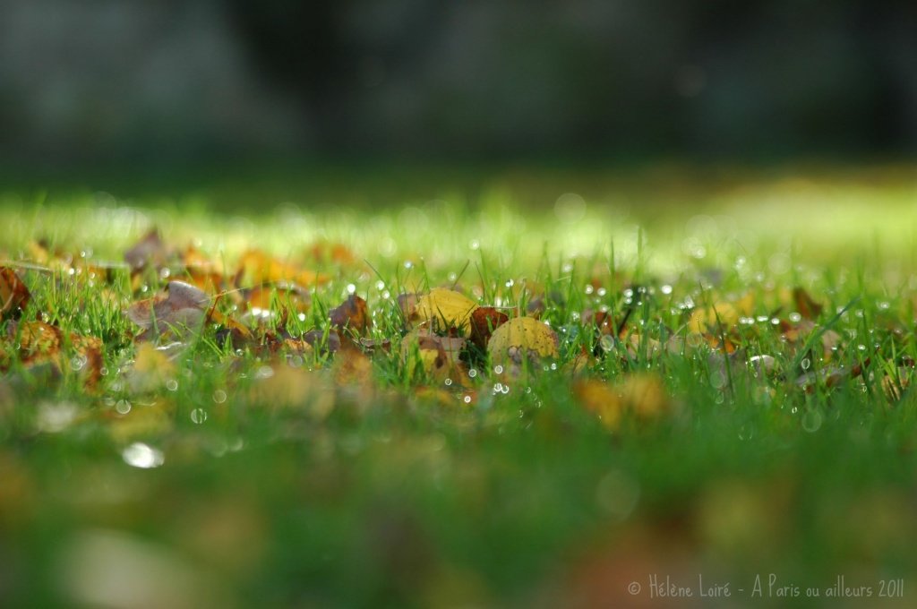 Autumn grass by parisouailleurs