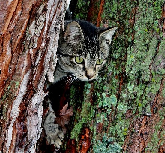 Peek a boo by cjwhite