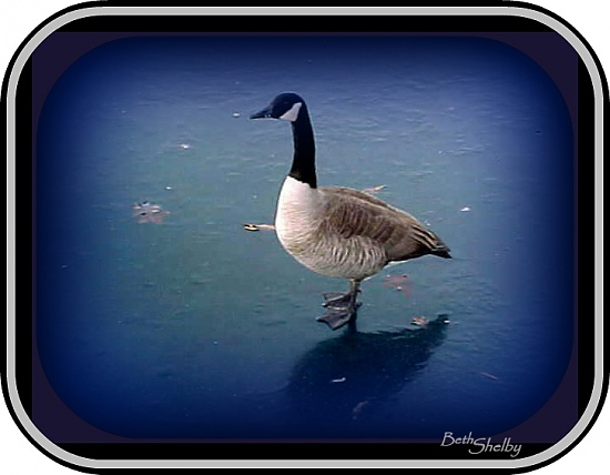 Walking on Water by vernabeth