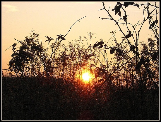 Setting Sun by olivetreeann
