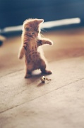 1st Dec 2011 - I hope you like kittens!