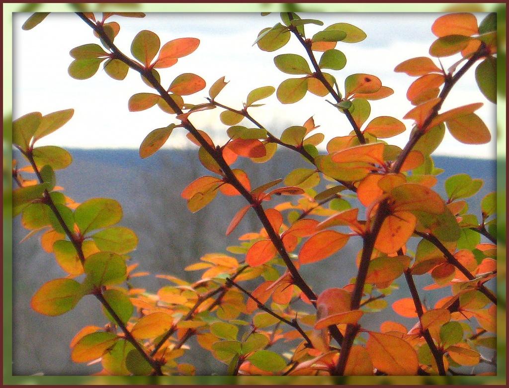 Autumn's Glory by olivetreeann