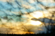 4th Dec 2011 - Feathered Sky