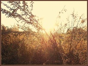 4th Dec 2011 - Golden Sun