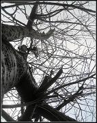 5th Dec 2011 - Tree in December