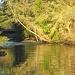 On Golden Creek by pamelaf