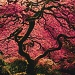 Tree in Japanese Garden by grecican