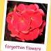 Forgotten flowers by jmj