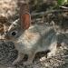 Bunny Rabbit by kerristephens