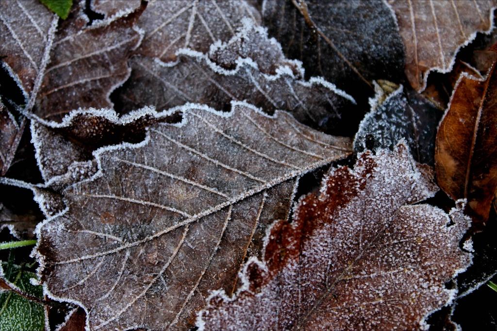 Frosty Morning by cjwhite