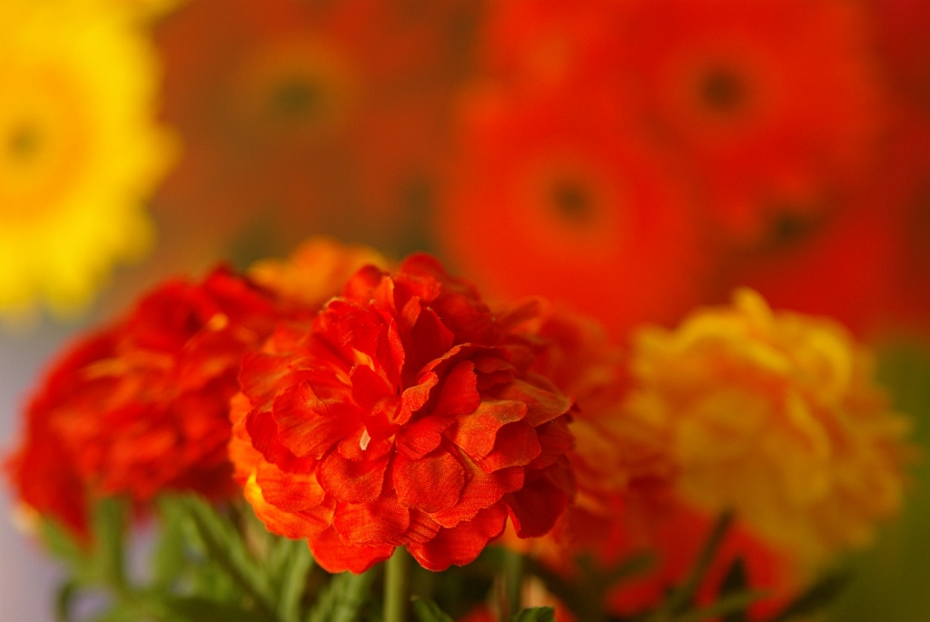 Decorative Flowers by cjphoto