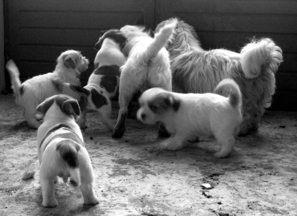 Just for fun: The puppies - day 60 by parisouailleurs