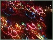 11th Dec 2011 - Christmas Lights