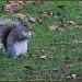 Richland Squirrel Redux by hjbenson