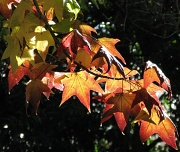 15th May 2010 - Autumn is Well and Truly Upon Us!