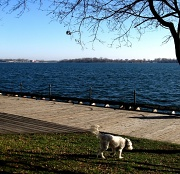 13th Dec 2011 - by the lake, take 2
