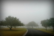 13th Dec 2011 - In To The Fog