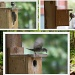 Bird house by bruni