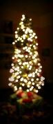 15th Dec 2011 - Christmas Tree