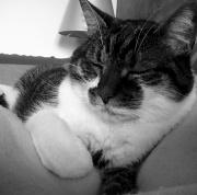 16th Dec 2011 - Just for fun: Sleepy cuddle