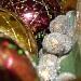 Christmas Sparkle by salza
