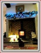 19th Dec 2011 - Keeping warm