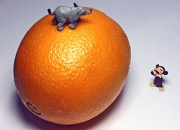 19th Dec 2011 - Big Juicy Orange