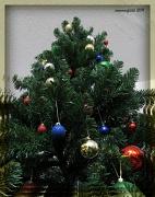 """19th Dec 2011 - things that say """"merry Christmas"""" - trees"""