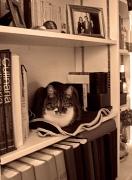 19th Dec 2011 - Between books