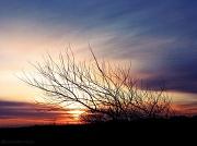 20th Dec 2011 - Sunrise