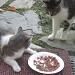 Kitty Carlisle & T.J. by Weezilou