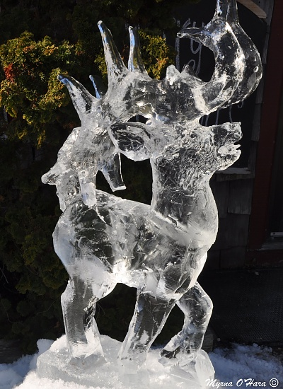 """""""Prancer is ready, or maybe this is Dancer"""" by sailingmusic"""