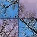 Sky by olivetreeann