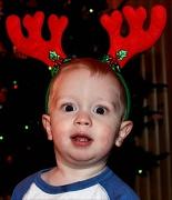 25th Dec 2011 - Little deer in the camera lights