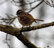 26th Dec 2011 - Winter visitor