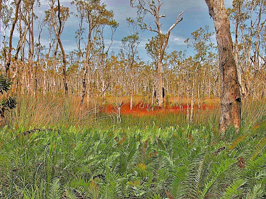 Paperbark swamp by peterdegraaff