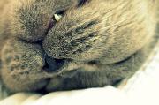 29th Dec 2011 - Sleepy Bert