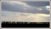 29th Dec 2011 - Hedge Line.