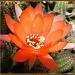 Cactus Flower by salza