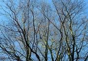 3rd Jan 2012 - beech tree